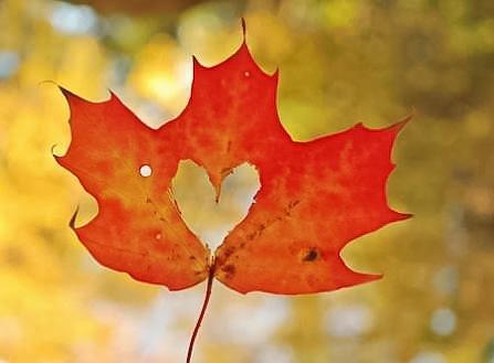 Йога, с дъх на Есен! - Есенна Йога ваканция 13-15 ноември